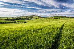 Green field and blue sky in Tuscany Royalty Free Stock Photo