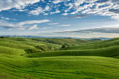 Green field and blue sky in Tuscany Royalty Free Stock Image