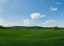 Green field with blue sky Stock Photography