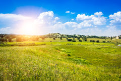Green field and blue sky Royalty Free Stock Images