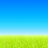 Green field and blue sky. Vector Stock Images