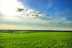 Green field and blue sky. Green field of wheat and blue sky Stock Photography