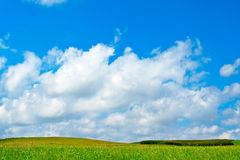 Green field, blue sky and white clouds stock photography