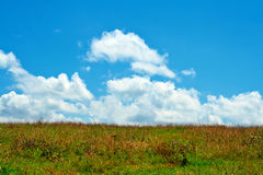 Green field, blue sky and white clouds Stock Image