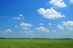 Green field, blue sky and white clouds. Summer landscape. Green field, blue sky and white clouds Royalty Free Stock Image