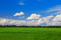 Green field, blue sky and white clouds. Green field and blue sky with white clouds Stock Image