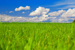 Green field, blue sky and white clouds Stock Images