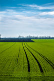 Green field with blue sky Royalty Free Stock Images