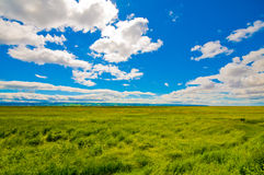 Green field, blue sky and white clouds Royalty Free Stock Photo