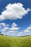 Green field with blue summer sky. Stock Photo