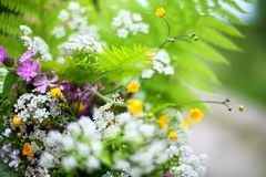 Green field bouquet of fern leaves, many different small white, yellow, purple wildflowers blurred background close up stock image