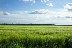 Green field and bright sun Stock Images