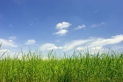 Green field and bue sky Royalty Free Stock Images