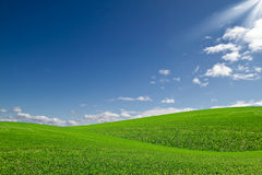 Green field and blue sky. Beautiful landscape of green field and blue sky Stock Photography