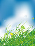 Green field with butterflies, summer background. Vector illustration Stock Photo