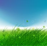 Green field with butterflies, summer background Stock Photos