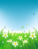 Green field with butterflies, summer background Stock Photo