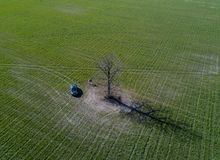 Green field car and alone tree in Belarus. Drone photo. Green field car and alone tree in Belarus. Shoot from drone Royalty Free Stock Photos
