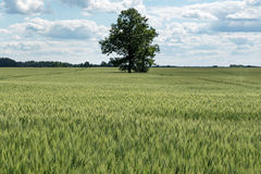Green field. Stock Photo