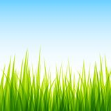 Green field and clear blue sky Stock Images