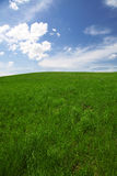 Green field with clear blue sky and clouds Royalty Free Stock Photography