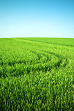 Green field and clear sky Royalty Free Stock Images