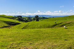 Green field close to Hobbiton, Matamata, New Zealand Stock Photos