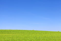 Green field and cloudless blue sky. Royalty Free Stock Images