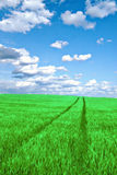 Green field with clouds. Green wheat field with the beautiful cloudscape Royalty Free Stock Image