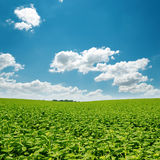 Green field and clouds in blue sky Royalty Free Stock Photos