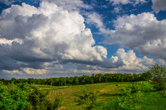 Green field and clouds. Green farmland with blue sky and towering white cumulus clouds Royalty Free Stock Photography