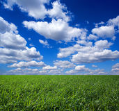 Green field and cloudscape. Scenic view of green field under blue sky and cloudscape Stock Image