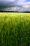 Green Field And Cloudy Blue Sky. Spring field with green grass and blue sky Stock Image