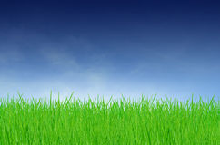 Green field on a cloudy day. Agriculture background barley cereal cloud stock photo