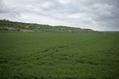 Green field and cloudy day. Stock Photography