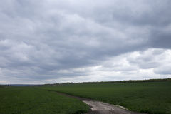 Green field and cloudy day. Royalty Free Stock Photo