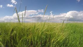 Green Field and Cloudy Sky stock footage