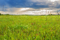 Green field and cloudy sky Stock Photo