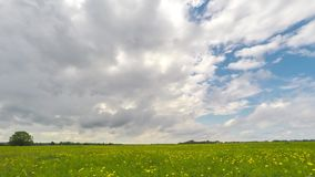 Green field and cloudy sky timelapse. Beautiful summer landscape. stock video footage