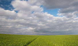Green field and cloudy sky Stock Photography