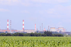 Green field with corn and big Oil Refinery Stock Photography