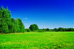 Green field in countryside Royalty Free Stock Photo