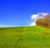 Green field in countryside Royalty Free Stock Photos