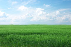 Green field in countryside. Scenic view of green wheat field in countryside with cloudscape background stock photos