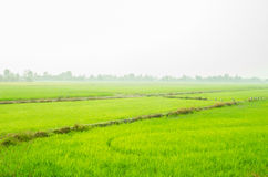 Green field in the countryside background. Green field infront of foggy countryside background Royalty Free Stock Images