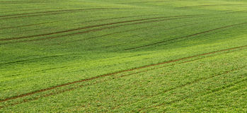 Green field in countryside Stock Photography