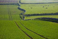 Green field in Scotland Royalty Free Stock Photography
