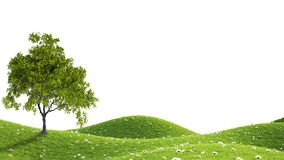 Green field. 3D rendering. Perfect summer green grass field. 3D rendering Royalty Free Stock Images