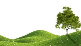 Green field. 3D rendering. Perfect summer green grass field. 3D rendering Royalty Free Stock Photo
