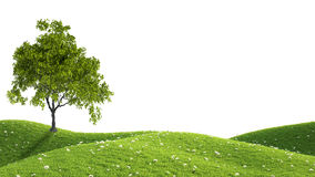 Green field. 3D rendering Royalty Free Stock Images